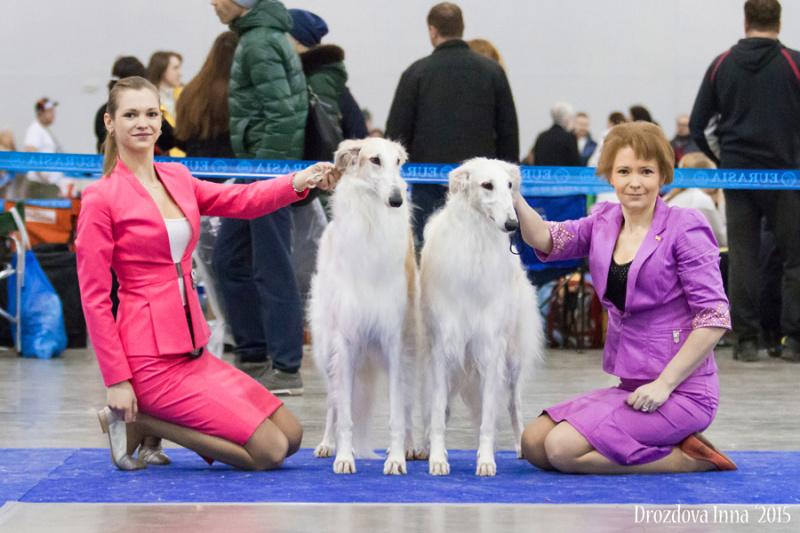 Хендлинг,презентация вашей собаки,обучение собаки и владельца,обучающие семинары по хендлингу