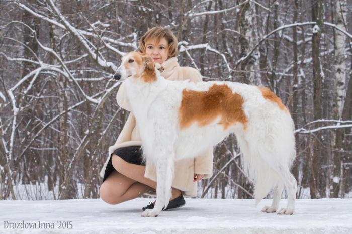 Русская псовая борзая (сука) Лунная Радуга Искусница