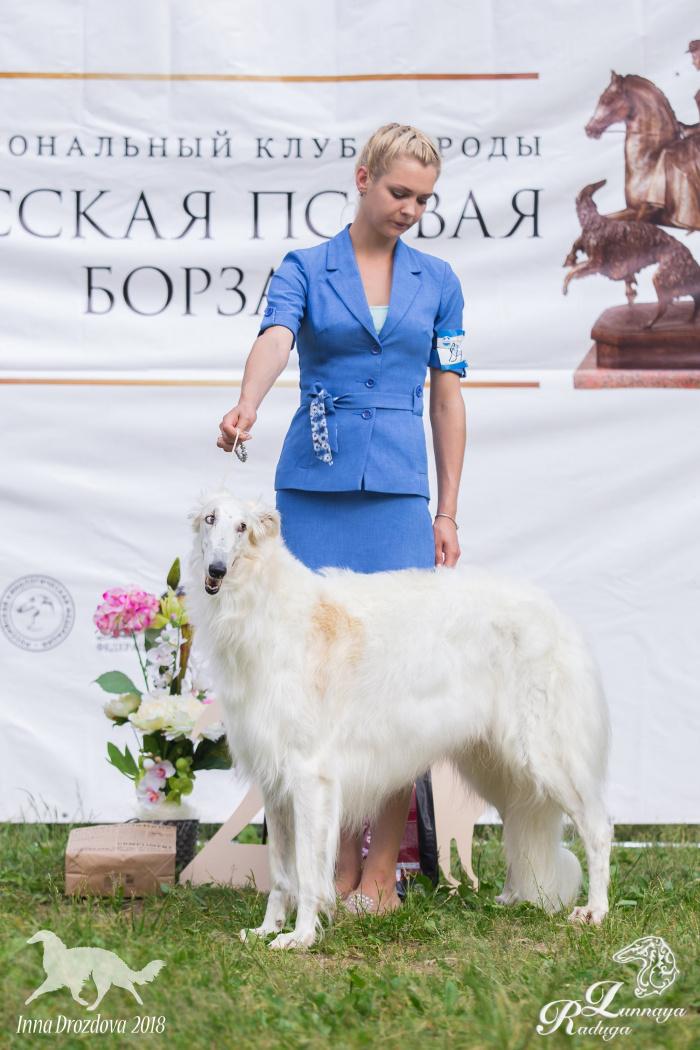 Русская псовая борзая (сука) Лунная Радуга Идея Фикс
