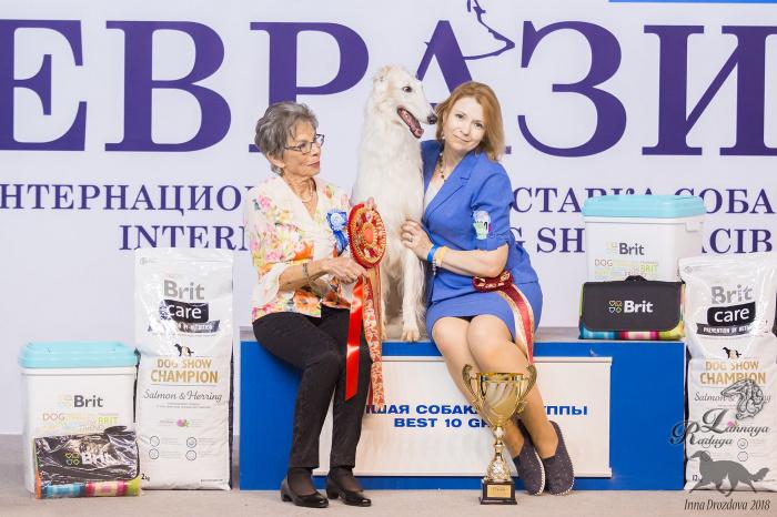 Русская псовая борзая (сука) АМУЛЕТ МОЙ БРАВО БАРОНЕССА