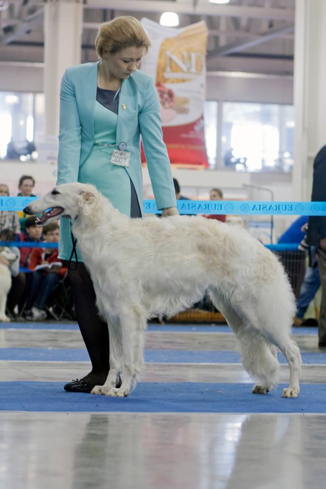 Русская псовая борзая (сука) Лунная Радуга Мята