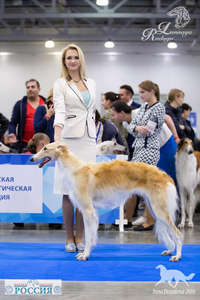 Русская псовая борзая (сука) Lunnaya Raduga Vlast'