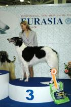 Русская псовая борзая (сука) Василиса Прекрасная из Поднебесья