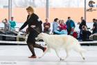 Всероссийская выставка ранга Чемпион РКФ